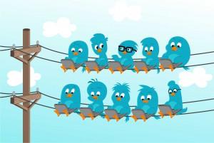 Birds-Social-Media1
